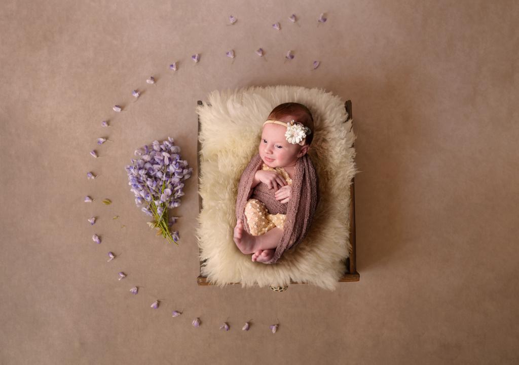 bébé-photo-couleur-avec-fleurs-glycine-mauve-fond-marron-sur-fourrure-seance-studio-nouveau né-